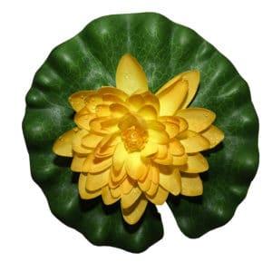 Näckros gul 20 cm